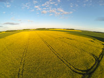 Areal view of blooming raps field Stock Photo
