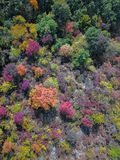 Areal view of fall forest Stock Photo
