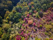 Areal view of colorful autumn forest Royalty Free Stock Photography