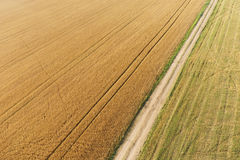 Areal view of corn field. Areal view of crop fields in sunny summer day stock image