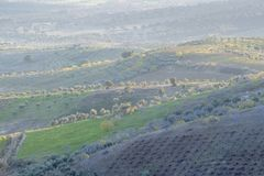 Areal view on an olive grove. On hill tops, Extremadura, Spain stock photos
