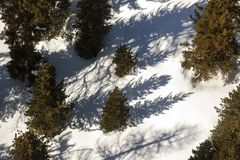 An areal view of pine trees and snow covered landscape in the alps switzerland.  Royalty Free Stock Image