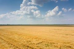 Areal widok upraw pola w pogodnym letnim dniu Pszeniczny żniwo Obrazy Stock