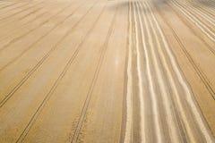 Areal widok upraw pola w pogodnym letnim dniu Pszeniczny żniwo Zdjęcia Royalty Free