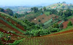 Areas of extensive vegetable gardens. On the hill, in Bandung, Indonesia Stock Images