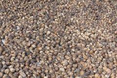 Areca ανασκόπηση καρυδιών Στοκ Εικόνα