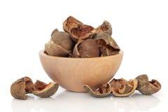 areca φλούδα καρυδιών Στοκ εικόνα με δικαίωμα ελεύθερης χρήσης