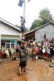 Areca φυλή δέντρο-αναρρίχησης για να τιμήσει την μνήμη της ημέρας της ανεξαρτησίας της Ινδονησίας Στοκ Φωτογραφίες