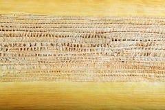 Areca φύλλο Στοκ Φωτογραφίες