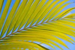 Areca φύλλωμα με το μπλε ουρανό Στοκ Εικόνες