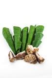 Areca betel καρύδι φύλλων Στοκ Φωτογραφίες
