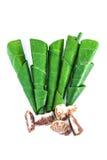 Areca betel καρύδι φύλλων Στοκ Φωτογραφία