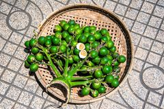 Areca catechu on basket. Areca catechu on the basket royalty free stock photography