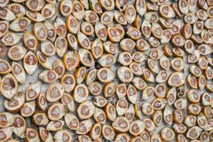 Areca catechu. Closeup group of Areca catechu cut stock image