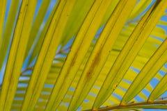 Areca gebladerte met blauwe hemel Royalty-vrije Stock Foto