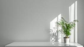 Areca Houseplant σε ένα άσπρο δοχείο σε έναν πίνακα σε ένα άσπρο υπόβαθρο τοίχων Στοκ φωτογραφίες με δικαίωμα ελεύθερης χρήσης