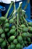 Areca nut. Grpup of Thai areca nut royalty free stock photography