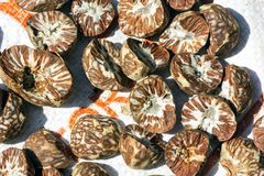 Betel nut royalty free stock photography