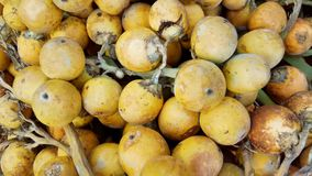 Areca nut Stock Photos