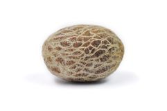 Areca Or Betal Palm S Nut Royalty Free Stock Images