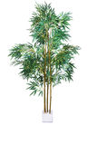 The areca palm isolated on the white background Stock Images