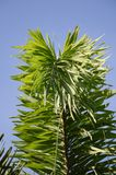 Areca palm leaves. In nature garden stock image