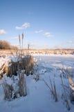 Aree umide congelate del fiume Mississippi immagine stock libera da diritti