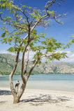 Areia branca beach near dili east timor Stock Images