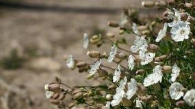 Areia branca das flores selvagens fotos de stock