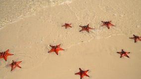 Areia branca tropical com a estrela do mar vermelha na água clara Mothion lento As estrelas do mar vermelhas grandes bonitas enco vídeos de arquivo