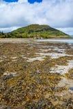 Areia coberta com a alga em uma cama de rio Fotografia de Stock