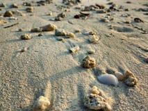 Areia completamente dos shell fotografia de stock