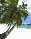 Areia da praia e Oceano Índico corais brancos do azure. Fotos de Stock Royalty Free