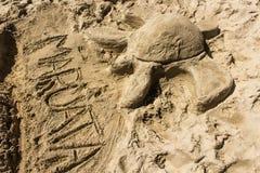 Areia da tartaruga na praia Fotos de Stock