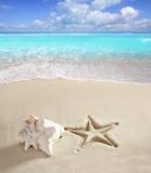 Areia do Cararibe do branco do escudo da cópia dos starfish da praia Foto de Stock