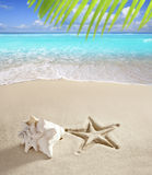 Areia do Cararibe do branco do escudo da cópia dos starfish da praia Imagem de Stock