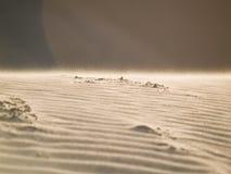 Areia do deserto foto de stock royalty free