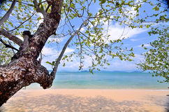 Areia do mar Imagens de Stock
