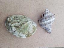 Areia do verão da praia de dois shell foto de stock