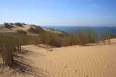 Areia e arbustos da praia do Virgin Imagens de Stock Royalty Free