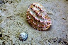 Areia e conchas do mar amarelas do oceano Escudos na areia dourada na praia do mar no por do sol fotos de stock royalty free