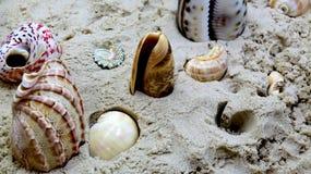 Areia e conchas do mar amarelas do oceano Escudos na areia dourada na praia do mar no por do sol foto de stock