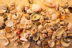 Areia e escudos Imagem de Stock
