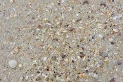 Areia e escudos do mar Imagem de Stock