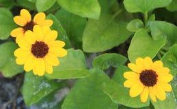 Areia e flores imagem de stock