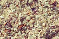 Areia e fundo naturais dos shell Escudo do Mar Negro na coleção das conchas do mar da costa Fim acima toned fotografia de stock royalty free