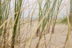 Areia e grama nas dunas Imagem de Stock