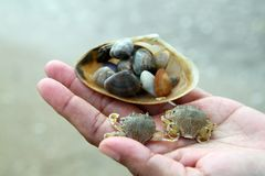 A areia e o caranguejo do fundo na praia de Tailândia têm natural Imagem de Stock Royalty Free