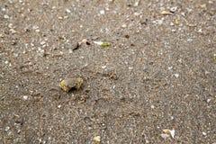 A areia e o caranguejo do fundo na praia de Tailândia têm natural Foto de Stock Royalty Free