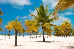 Areia e palmeiras brancas na praia Playa Sirena, Largo de Cayo, Cuba imagens de stock royalty free
